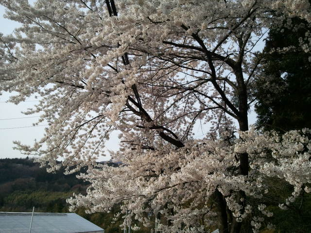 2014-04-19_163226.jpg